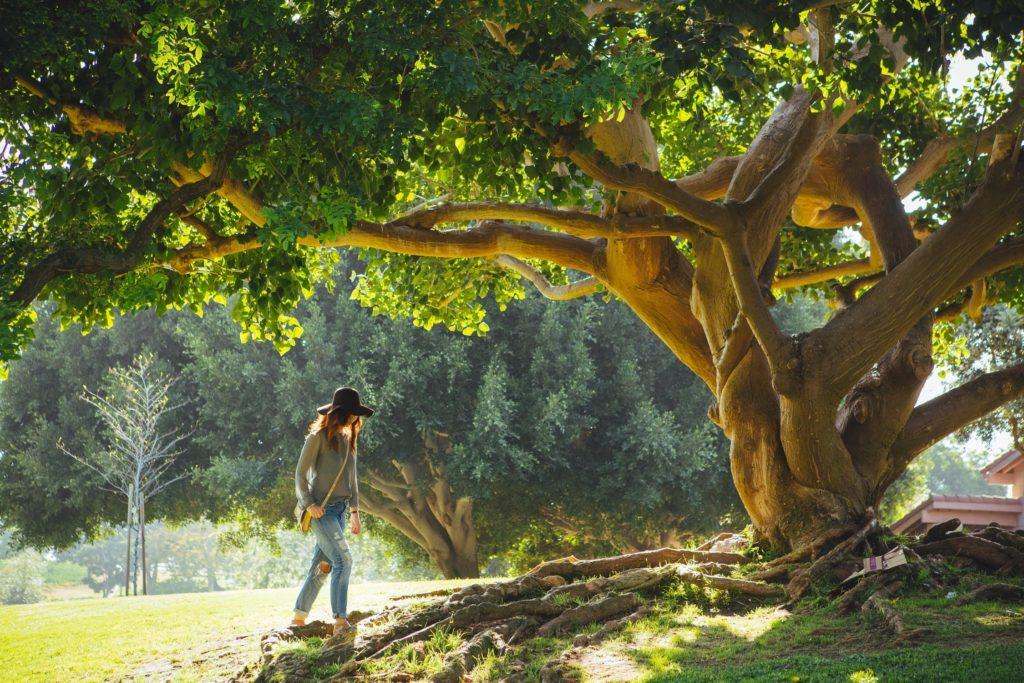 préserver les arbres existant pour vos aménagement extérieurs maison neuve