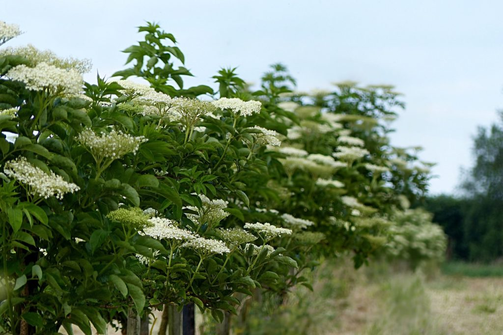 préserver les plantes et arbustes sauvages pour vos futurs aménagements extérieurs